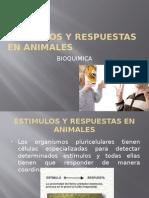 Estimulos y Respuestas en Animales