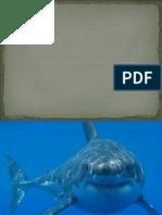 Shark week in Jacob