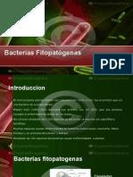 Clase III Bacterias Fitopatógenas