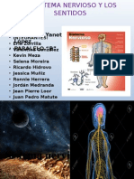 Sistema Nervioso Exposicion Biologia