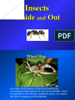Insects in Out