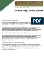 Hunderasse Cavalier King Charles Spaniel