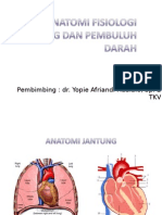 Anfis Cardiovascular