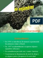 Curso Enjambres PC APIARIOS VERGEL.ppt