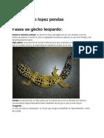 Guiafasesdegeckoleopardo.pdf