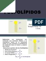 FOSFOLÍPIDOS-1