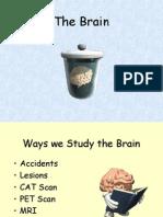 Brain.ppt
