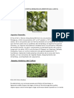Cultivo de Stevia Rebaudiana Bertoni