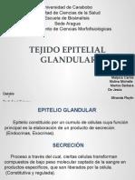 Seminario2 TEG histología