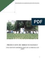 Arroz Ecologico Experiencia Cultivo Zapotal Jaen