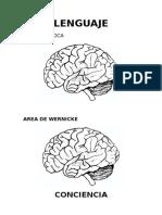 Areas Cerebrales en Psiquiatria