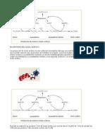 Biosíntesis Del Ácido Acético
