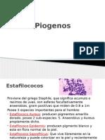 Cocos Piogenos