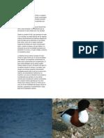 Santa Pola PDF
