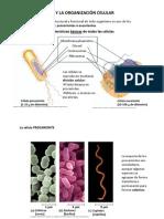 3.1 Celula Procarionte y Celula Eucarionte (1)