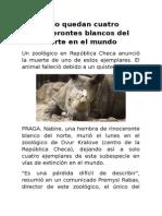 Solo Quedan Cuatro Rinocerontes Blancos Del Norte en El Mundo