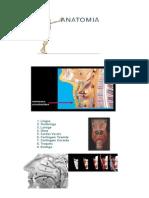 Anatomia via Aérea
