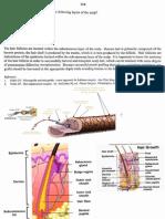Aesthetic  , breast 2001.pdf