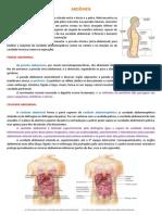 Resumo - Anatomia - Abdômen