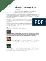 Plantas medicinales y para qué sirven.docx