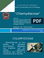 Chlamydiceae