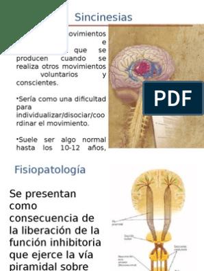 Sincinesias Afasia Sistema Nervioso