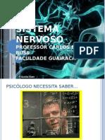 Neuroanatomia 1