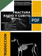 Fractura Radio y Cubito (1)
