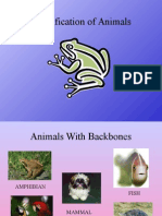 Classification of animals(1).ppt