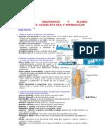 Corto 1 Anatomia Humana I