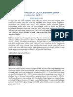 Proposal Bantuan Budidaya Ikan Lele Sangkuriang