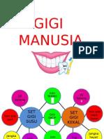 Gigi Manusia