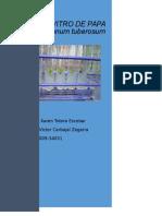 Cultivo in Vitro de Solanum Tuberosum