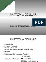 Clase Anatomia Rossi