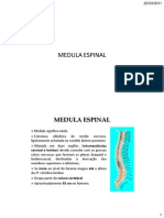 4 Medula Espinal
