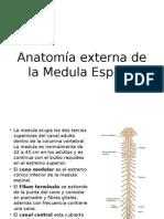 Anatomía Externa de La Medula Espinal
