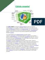 Célula vegetal.docx