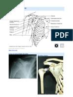 KT Shoulder Anatomy