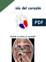 Anatomía Del Corazón (1)