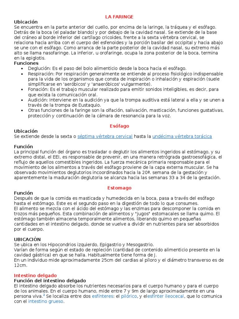 Encantador Ubicación De Intestino Delgado Adorno - Anatomía de Las ...