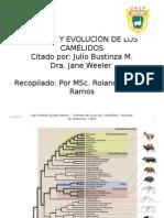 Origen y Evolución de los camélidos sudamericanos