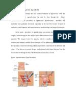 Treatment and Management Appendicitis