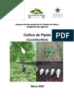 Cultivo de Pipian Nicaagua.