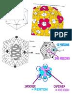 Virus Icosaedro