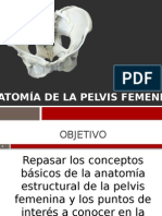 pelvis anatomia completa.pptx