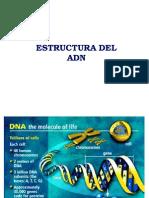 1 Estructura Del Adn