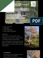 Presentación Plantas Medicinales de Opico