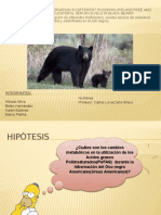 PAPER_BIOQUIMICA/OSO POLAR
