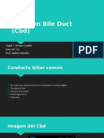 common bile duct (cbd)