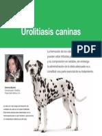 AV 43 Urolitiasis Caninas